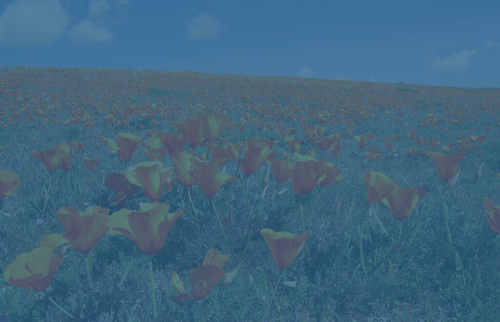 Field of California poppies - state taxation concept
